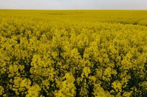 20110502-DSC_0259_desktop (The Flowers)