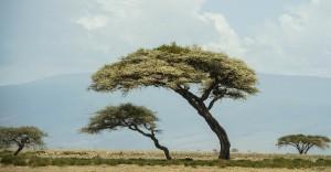 20120212__MHB7781_desktop (The Trees)