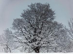 20120319_0949-_MHB0583_desktop (The Snow)