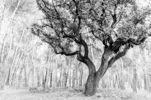 20130323_2017-ZEN_8217_desktop (The Trees)