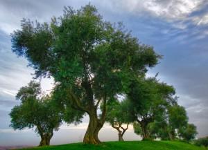 DSC_0751-Edit_desktop (The Trees)