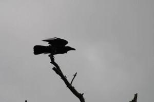 Exposicion-DSC_1075-Edit_desktop (The Birds)