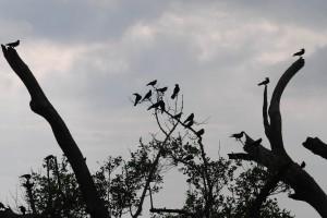 Exposicion-DSC_1088-Edit_desktop (The Birds)