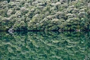 Exposicion-Nueva Zelanda – 2008-07-31 – 1575_desktop (The Nature)
